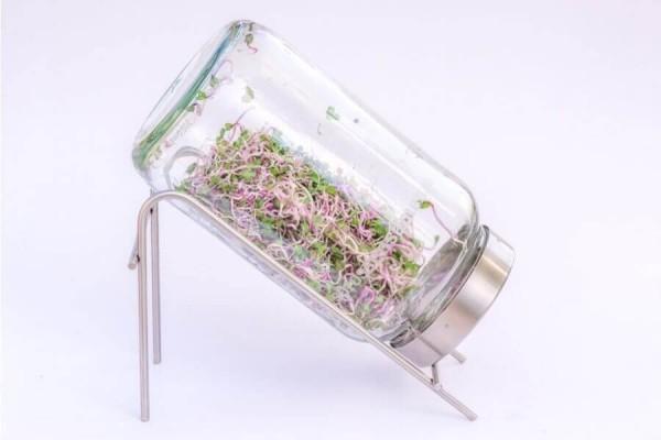 Keimgerät 1700ml aus Glas mit Ständer