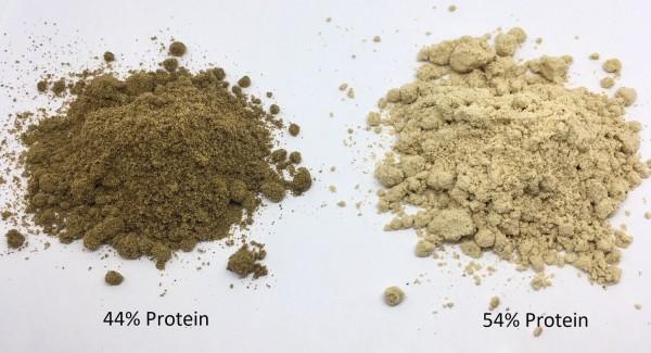 Hanfprotein Pulver Vergleich