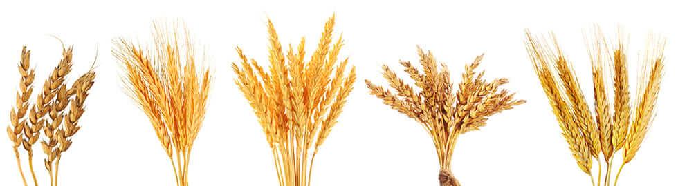 isenhaltiges Getreide und Getreideprodukte